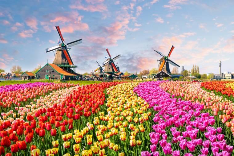 Keukenhof Gardens, Amsterdam
